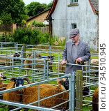 A man looking at sheep at an agricultural show in the Scottish Borders... (2016 год). Редакционное фото, фотограф Andrew Wilson / age Fotostock / Фотобанк Лори