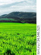 Image of a landscape of a green grass or wheat field and a blue sky... Стоковое фото, фотограф Zoonar.com/Ian Iankovskii / easy Fotostock / Фотобанк Лори