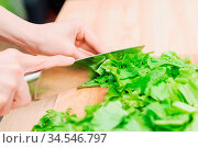 Close-up Female hands chopping a green plant salad cooking salad from... Стоковое фото, фотограф Zoonar.com/Ian Iankovskii / easy Fotostock / Фотобанк Лори