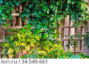 Summer background with tropical tree leaves. Стоковое фото, фотограф Zoonar.com/Galyna Andrushko / easy Fotostock / Фотобанк Лори