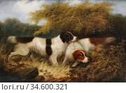Armfield George - Two Spaniels - British School - 19th Century. Стоковое фото, фотограф Artepics / age Fotostock / Фотобанк Лори