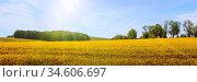 Frühsommerliche Sonne über weiter Landschaft mit Rapsfeldern und Baumallee... Стоковое фото, фотограф Zoonar.com/rieger wolfgang / easy Fotostock / Фотобанк Лори