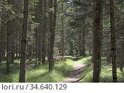 Foret d'epicea, Region du Trentin-Haut-Adige, Tyrol du Sud, Italie... Стоковое фото, фотограф Christian Goupi / age Fotostock / Фотобанк Лори