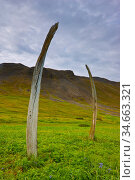 Whale bones placed in a ritual formation by indigenous people at the... Стоковое фото, фотограф Jenny E. Ross / Nature Picture Library / Фотобанк Лори