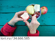 The elderly gardener woman cleans the skins from apples to eat fruits... Стоковое фото, фотограф Zoonar.com/Aleksandr Volkov / easy Fotostock / Фотобанк Лори