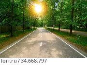 Gerade leere Landstraße im Sommer mit Sonne zwischen Bäumen. Стоковое фото, фотограф Zoonar.com/Robert Kneschke / age Fotostock / Фотобанк Лори