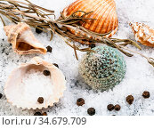 Seashells, coarse grained Sea Salt and peppercorns close up. Стоковое фото, фотограф Zoonar.com/Valery Voennyy / easy Fotostock / Фотобанк Лори