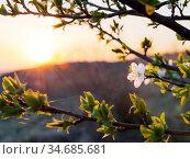 Blüte richtet sich zur Sonne aus. Стоковое фото, фотограф Zoonar.com/Ewald Fr / easy Fotostock / Фотобанк Лори