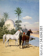 Harington Bird John Alexander - Grey and Bay Arab Stallions with ... Редакционное фото, фотограф Artepics / age Fotostock / Фотобанк Лори