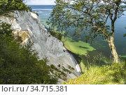 Steilküste und Kreidefelsen Møns Klint, Insel Mön, Dänemark, Europa... Стоковое фото, фотограф Peter Schickert / age Fotostock / Фотобанк Лори