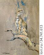 Swan Cuthbert Edmund - Study of a Leopard in a Tree - British School... Редакционное фото, фотограф Artepics / age Fotostock / Фотобанк Лори