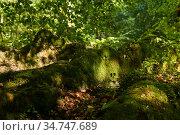 Mossy tree roots on a trail in a subtropical forest. Стоковое фото, фотограф Евгений Харитонов / Фотобанк Лори