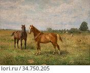 Montigny Jules - Twee Paarden in Een Landschap - Belgian School - ... Стоковое фото, фотограф Artepics / age Fotostock / Фотобанк Лори