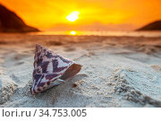 Tropical beach with seashell in white sand and beautiful sunset on... Стоковое фото, фотограф Zoonar.com/Ivan Mikhaylov / easy Fotostock / Фотобанк Лори