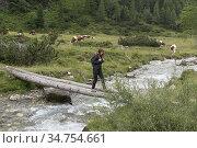 Femme traversant le torrent en marchant sur des troncs couches,Vallee... Стоковое фото, фотограф Christian Goupi / age Fotostock / Фотобанк Лори