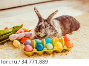 Easter rabbit in the room on a carpet with colorful eggs. Стоковое фото, фотограф Zoonar.com/Oksana Shufrych / easy Fotostock / Фотобанк Лори