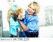 mature woman hairdresser wipes puppy of Afghan hound in hairdresser for dogs. Стоковое фото, фотограф Татьяна Яцевич / Фотобанк Лори