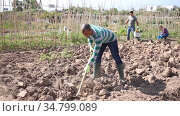Young indian man gardener working at land with garden mattock outdoor. Стоковое видео, видеограф Яков Филимонов / Фотобанк Лори