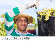 Cheerful latin american winegrower carrying bucket with ripe grapes. Стоковое фото, фотограф Яков Филимонов / Фотобанк Лори