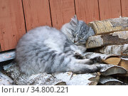 Сладкий сон. Котенок спит на поленнице дров. Стоковое фото, фотограф Зобков Юрий / Фотобанк Лори