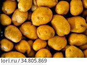 Obst und Gemuese direkt vom Erzeuger mit Selbstvermarktung im Markgraeflerland... Стоковое фото, фотограф Zoonar.com/JOACHIM G. PINKAWA / easy Fotostock / Фотобанк Лори