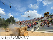 Birdsof prey performing at the bird show at the Beauval Zoo, Saint... Стоковое фото, фотограф Eric Baccega / Nature Picture Library / Фотобанк Лори