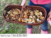 Basket with forest mushrooms from Czech Republic. Стоковое фото, фотограф Richard Semik / easy Fotostock / Фотобанк Лори