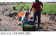 Farm worker feeling pain at work, anxious man talking on phone with doctor. Стоковое видео, видеограф Яков Филимонов / Фотобанк Лори