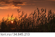 Sunset over Gulf of Finland, summer landscape. Стоковое фото, фотограф EugeneSergeev / Фотобанк Лори