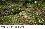 Streaming water in Bechir's Creek near Soroca, Moldova. Редакционное видео, видеограф Сергей Старуш / Фотобанк Лори