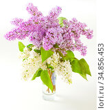 Bouquet of white and purple lilac flowers in a glass vase. Стоковое фото, фотограф Анна Гучек / Фотобанк Лори