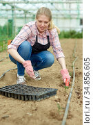 Woman planting seedlings in ground. Стоковое фото, фотограф Яков Филимонов / Фотобанк Лори