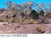 Rock formation, group of trees, Warrumbungle National Park, NSW, ... Стоковое фото, фотограф R. Kunz / age Fotostock / Фотобанк Лори