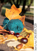 Autumn plot: a skein of thread for knitting emerald green with bright yellow leaves and horse chestnut fruits. Стоковое фото, фотограф ok_fotoday / Фотобанк Лори