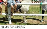 Girl riding a horse in the ranch 4k. Стоковое видео, агентство Wavebreak Media / Фотобанк Лори