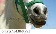 White horse in the ranch 4k. Стоковое видео, агентство Wavebreak Media / Фотобанк Лори