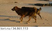 Dogs playing in the beach 4k. Стоковое видео, агентство Wavebreak Media / Фотобанк Лори
