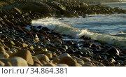 Waves in the sea on a sunny day 4kWaves. Стоковое видео, агентство Wavebreak Media / Фотобанк Лори