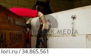 Woman taking horse rein in stable 4k. Стоковое видео, агентство Wavebreak Media / Фотобанк Лори