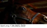 Woman stroking a horse in stable 4k. Стоковое видео, агентство Wavebreak Media / Фотобанк Лори