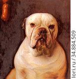 Matsch Franz Von - a Bulldog - Austrian School - 19th Century. (2020 год). Редакционное фото, фотограф Artepics / age Fotostock / Фотобанк Лори