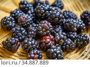 Blackberries (Rubus), Fallston, MD. Стоковое фото, фотограф Edwin Remsberg / age Fotostock / Фотобанк Лори