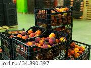 Stacks of fruit boxes with fresh peaches in storage warehouse. Стоковое фото, фотограф Яков Филимонов / Фотобанк Лори