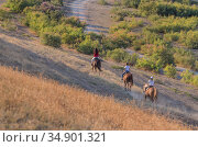 Horseback ride of a group of people. Стоковое фото, фотограф Юрий Бизгаймер / Фотобанк Лори