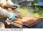 Beekeeper on apiary. Beekeeper is working with bees and beehives on... Стоковое фото, фотограф David Herraez Calzada / easy Fotostock / Фотобанк Лори