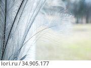 White peacock feathers, luxury window decoration. Стоковое фото, фотограф EugeneSergeev / Фотобанк Лори