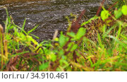 grass growing on river bank. Стоковое видео, видеограф Syda Productions / Фотобанк Лори