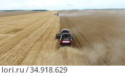 Grain harvester driving on golden wheat fields, rear view, harvesting yellow wheat at summer. Стоковое видео, видеограф Кекяляйнен Андрей / Фотобанк Лори
