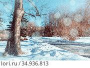 Зимний парк, зимний пейзаж в солнечный день. Winter park alley in sunny snowy weather, winter park in sunny day. Стоковое фото, фотограф Зезелина Марина / Фотобанк Лори