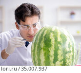 Scientist testing watermelon in lab. Стоковое фото, фотограф Elnur / Фотобанк Лори